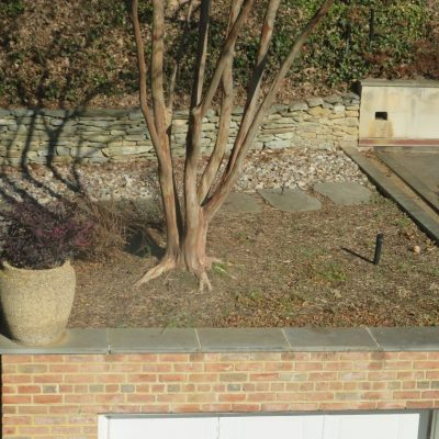 A tree is growing on the roof!